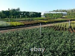 Heavy Duty Ground Cover Pegs 6 150mm Weed Control Membrane Fabric Fixing Anchor